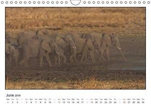 African Elefants (UK-Version) (Wall Calendar 2016 DIN A4 Landsca