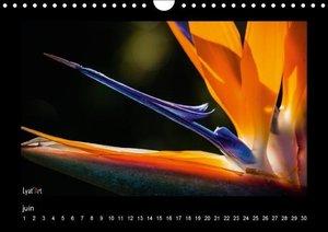 Fleurs et couleurs (Calendrier mural Calendrier perpétuel DIN A4