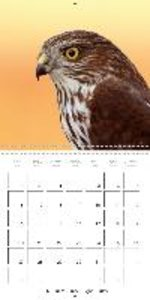 Birds Of Prey In Portrait (Wall Calendar 2015 300 × 300 mm Squar