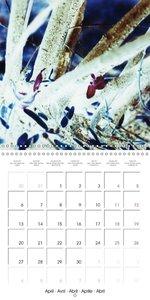Nature Visions fantastiques (Calendrier mural 2015 300 × 300 mm