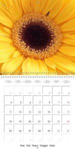 The Variety of Gerberas (Wall Calendar 2015 300 × 300 mm Square)