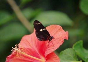 Zarte Schönheiten - Exotische Schmetterlinge (Posterbuch DIN A2