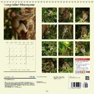 Long-tailed Macaques (Wall Calendar 2015 300 × 300 mm Square)