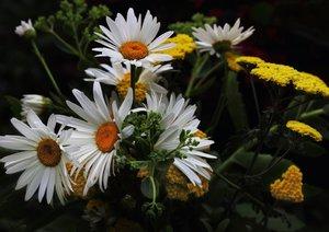 Florale Harmonie - Visuelle Poesie der Blumen (Posterbuch DIN A4