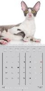 Mystic Cats (Wall Calendar 2015 300 × 300 mm Square)