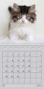Mystic Cats (Wall Calendar 2015 300 × 300 mm Square)