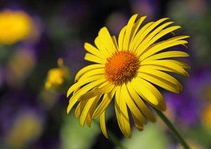 Blumige Brise - Visuelle Poesie der Blumen (Posterbuch DIN A3 qu