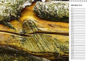 Hampe, G: Wood Structures / UK-Version / Birthday Calendar