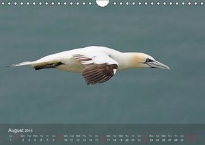 Northern Gannets (UK-Version) (Wall Calendar 2015 DIN A4 Landsca