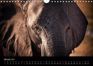 Elefanten - Die sanften Riesen Afrikas