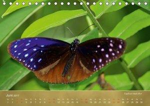 Zarte Schönheiten - Schmetterlinge MalaysiasCH-Version