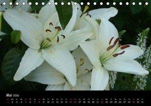 Lilien - Die Stars im Garten (Tischkalender 2016 DIN A5 quer)