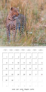 Emotional Moments: African Wildlife (Wall Calendar 2015 300 × 30