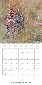 Emotional Moments: African Wildlife (Wall Calendar 2015 300 × 30