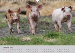 Meyer, J: Glücklichen, aus dem Leben glücklicher Schweine (W