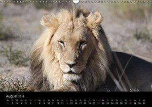 Löwen - Könige der Tiere (Wandkalender 2016 DIN A3 quer)