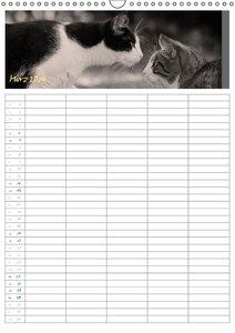 Miezekatzen Planungskalender (Wandkalender 2016 DIN A3 hoch)