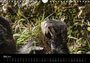 Hebgen, P: Gorillas - Die sanften Wilden (Wandkalender 2015