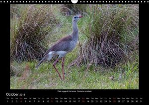 Woehlke, J: Birds of the Pantanal / UK-Version