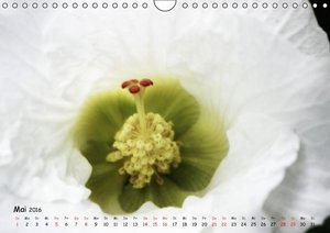 Weiß - ein Blütentraum (Wandkalender 2016 DIN A4 quer)