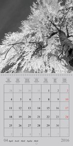 Winter Black and White (Wall Calendar 2016 300 × 300 mm Square)