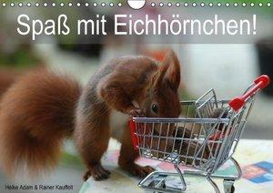 Spaß mit Eichhörnchen! (Wandkalender 2016 DIN A4 quer)
