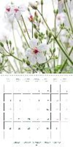 Blooms in White (Wall Calendar 2015 300 × 300 mm Square)