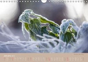 THESE PLANTS ARE WILD AND HEALTHY (Wall Calendar 2015 DIN A4 Lan