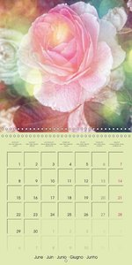 Romantic Roses (Wall Calendar 2015 300 × 300 mm Square)