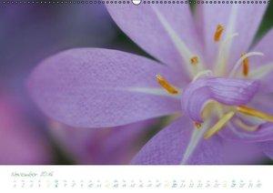 Blumen im Porträt (Wandkalender 2016 DIN A2 quer)