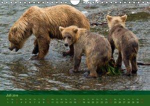 Der Bärenkalender 2016 CH-Version (Wandkalender 2016 DIN A4 quer