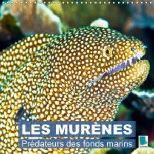 Prédateurs des fonds marins : les murènes (Calendrier mural 2015