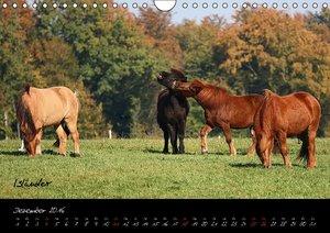 Pferde - wundervolle Geschöpfe (Wandkalender 2016 DIN A4 quer)