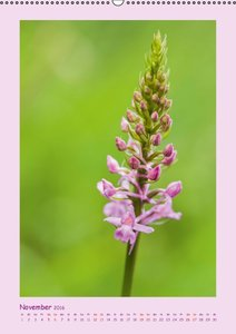 wilde Orchideen in Deutschland (Wandkalender 2016 DIN A2 hoch)