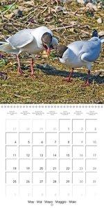 Caught on Camera (Wall Calendar 2015 300 × 300 mm Square)