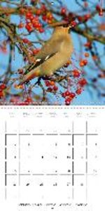 Caught on Camera (Wall Calendar 2015 300 × 300 mm Square)