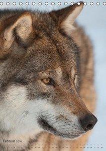 Emotionale Momente: Der Wolf. (Tischkalender 2016 DIN A5 hoch)