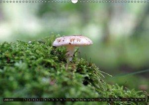 Mushroom Season (Wall Calendar 2015 DIN A3 Landscape)