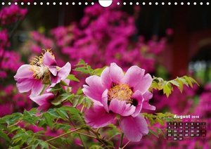 Peony Rose Without Thorns (Wall Calendar 2016 DIN A4 Landscape)