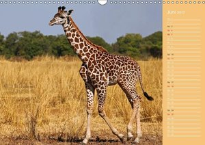 Afrikas Kinderstube (Wandkalender 2017 DIN A3 quer)