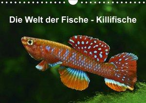 Die Welt der Fische - KillifischeCH-Version