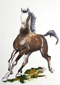 Pferde und Stiere (Posterbuch DIN A4 hoch)