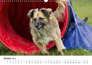 Fliegende Hunde beim Agility (Wandkalender 2016 DIN A3 quer)