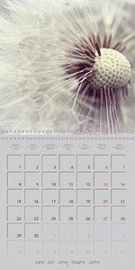 Romantic bouquet of memories (Wall Calendar 2015 300 × 300 mm Sq