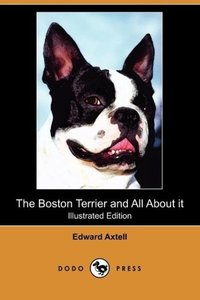 The Boston Terrier and All about It