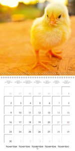 Newly hatched: Cute chicks (Wall Calendar 2015 300 × 300 mm Squa