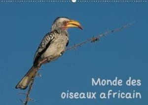 Monde des oiseaux africain (Calendrier mural 2015 DIN A2 horizon