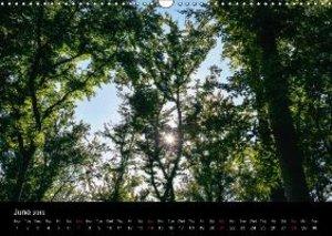 Jager, T: Trees / UK-Version