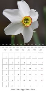 Flower Varieties (Wall Calendar 2015 300 &times 300 mm Square)
