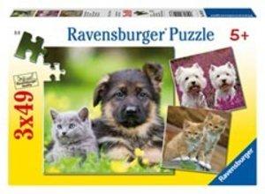 Hunde und Katzen. Puzzle 3 X 49 Teile